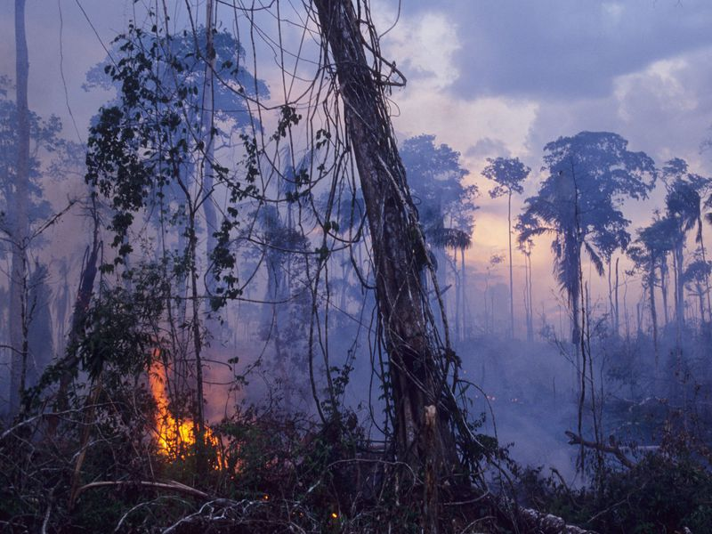 Amazon Rainforest set on fire.
